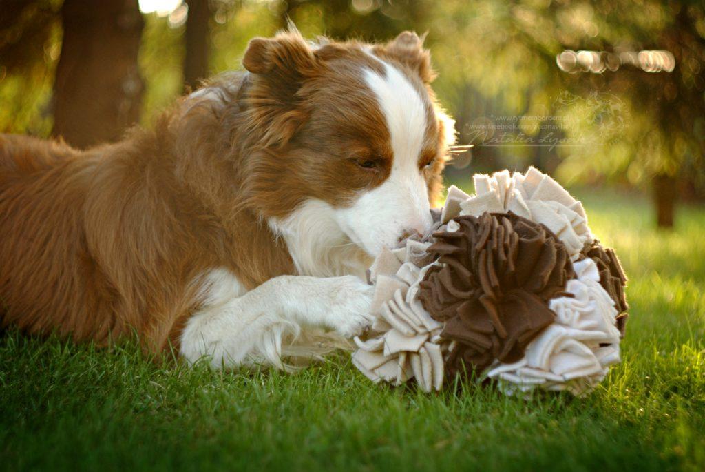 TEST: recenzja KABOO – zabawki węchowe dla psów kostka